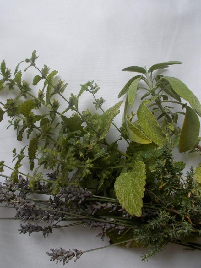 lavender, sage, thyme, lemon balm